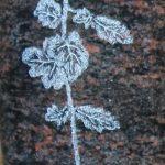 Chrysantheme fotorealistisch gestrahlt und getönt